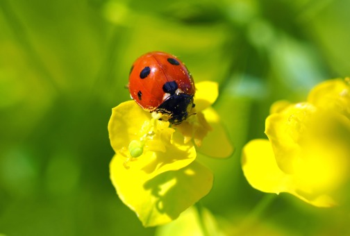 ladybug-1357782_1920-1